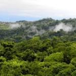 Baltimore Sun Costa Rica rainforest