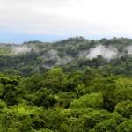 Hartford Courant Costa Rica rainforest