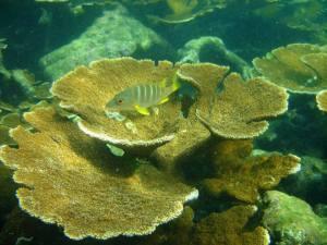 panama_diving