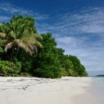 Zapatillas islands