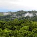 Carroll County Times Costa Rica rainforest