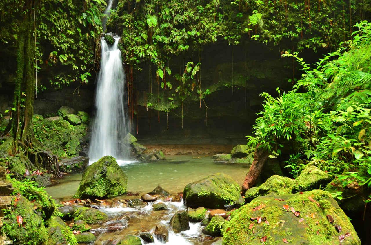Emerald Pool on Dominica