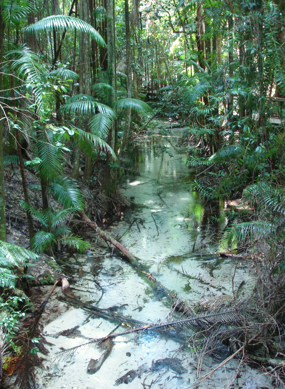 Wanggoolba Creek at Fraser Island's Central Station