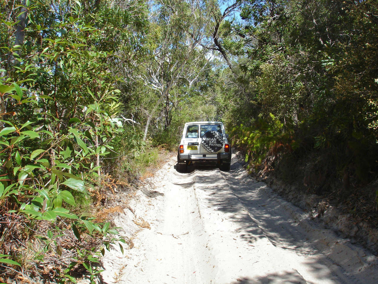 Inland track on Fraser Island