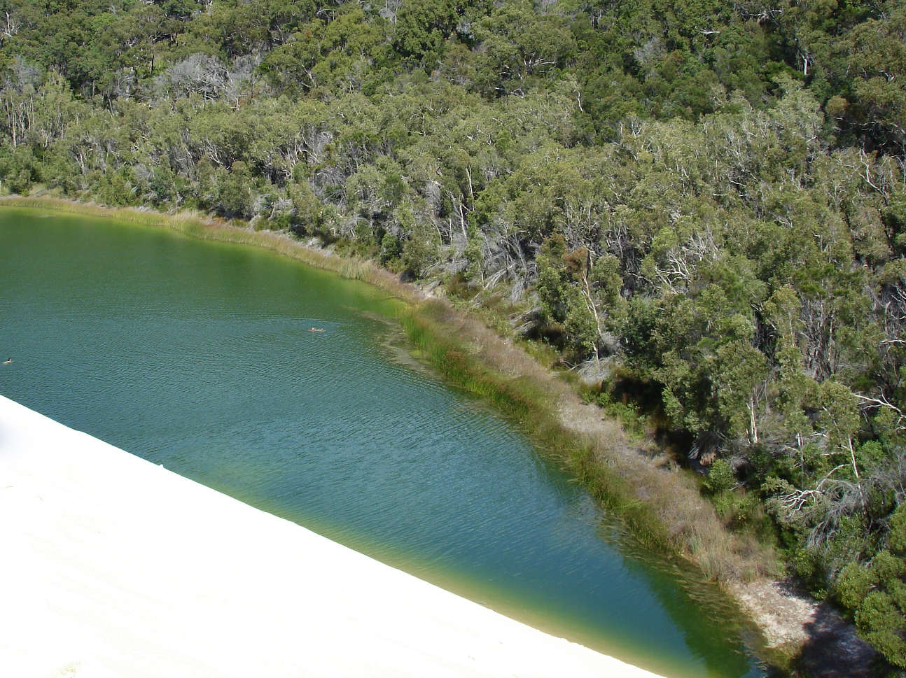 Lake Wabby from above