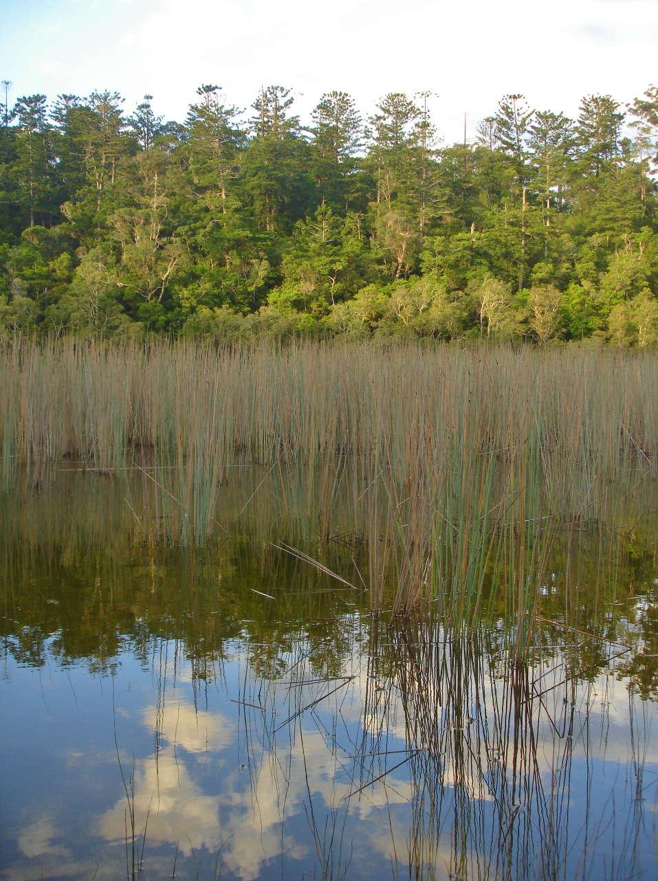 Swamp on Fraser Island