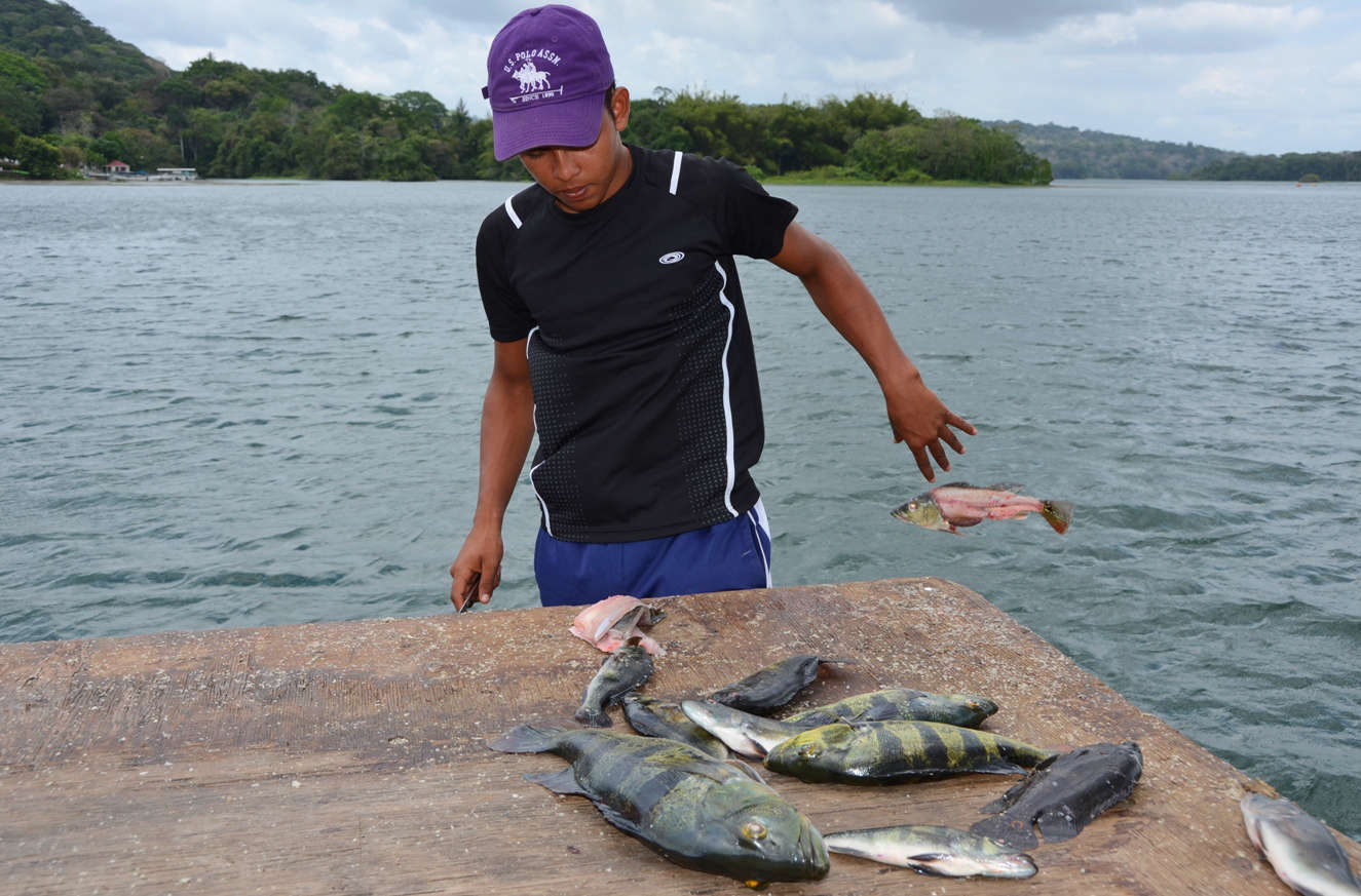 A local kid fillets our catch of the day after fishing in the river arms of Lago Gatun