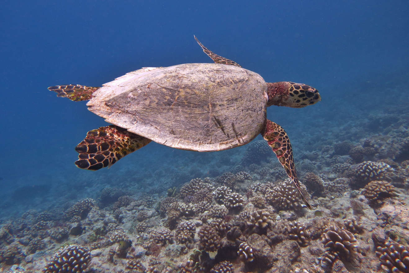 witness the magic of sea turtle nesting and hatching travel intense
