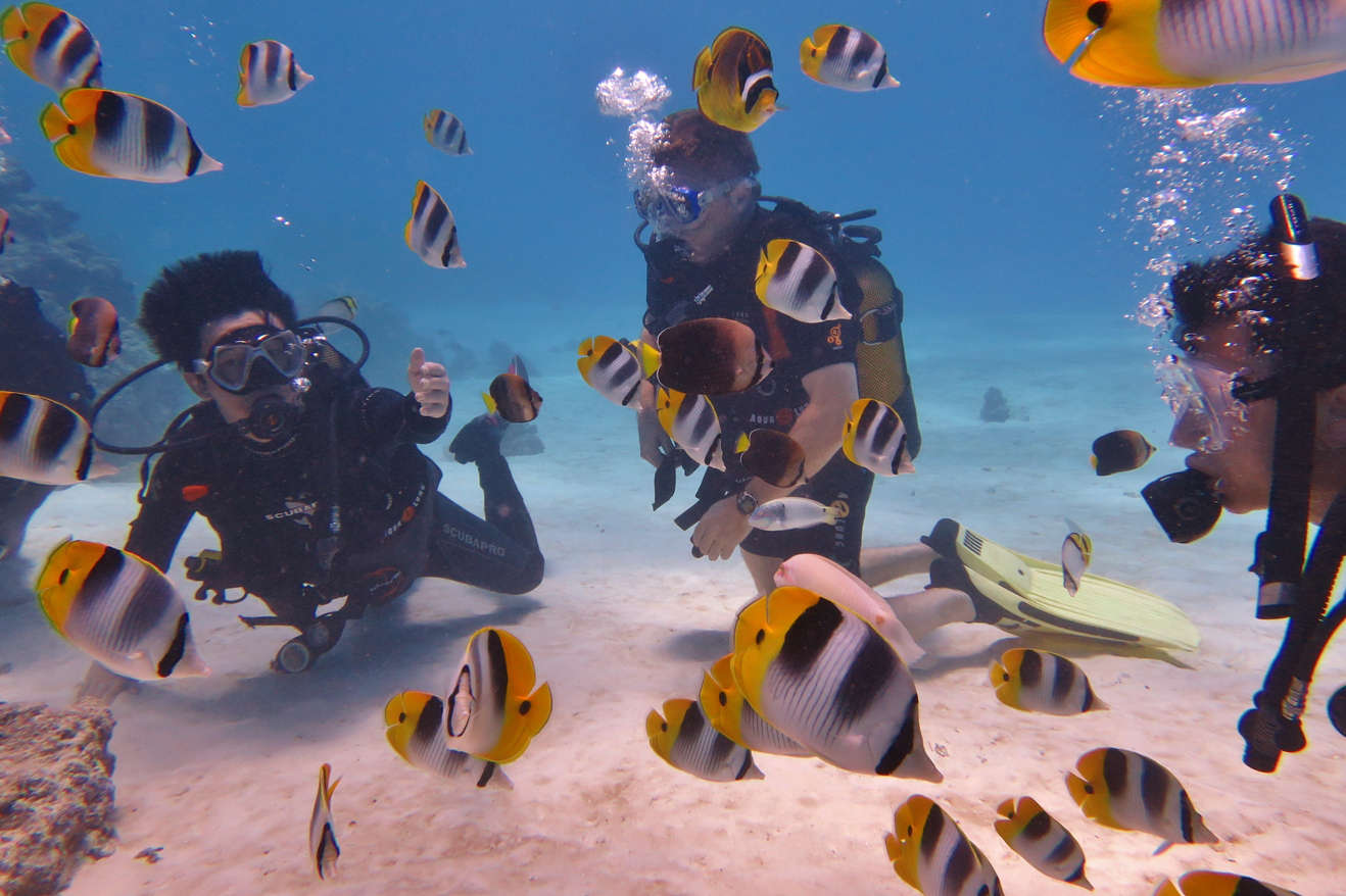 divers with butterfly fish