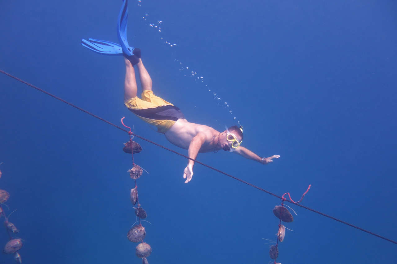 Dive for pearls in Bora Bora