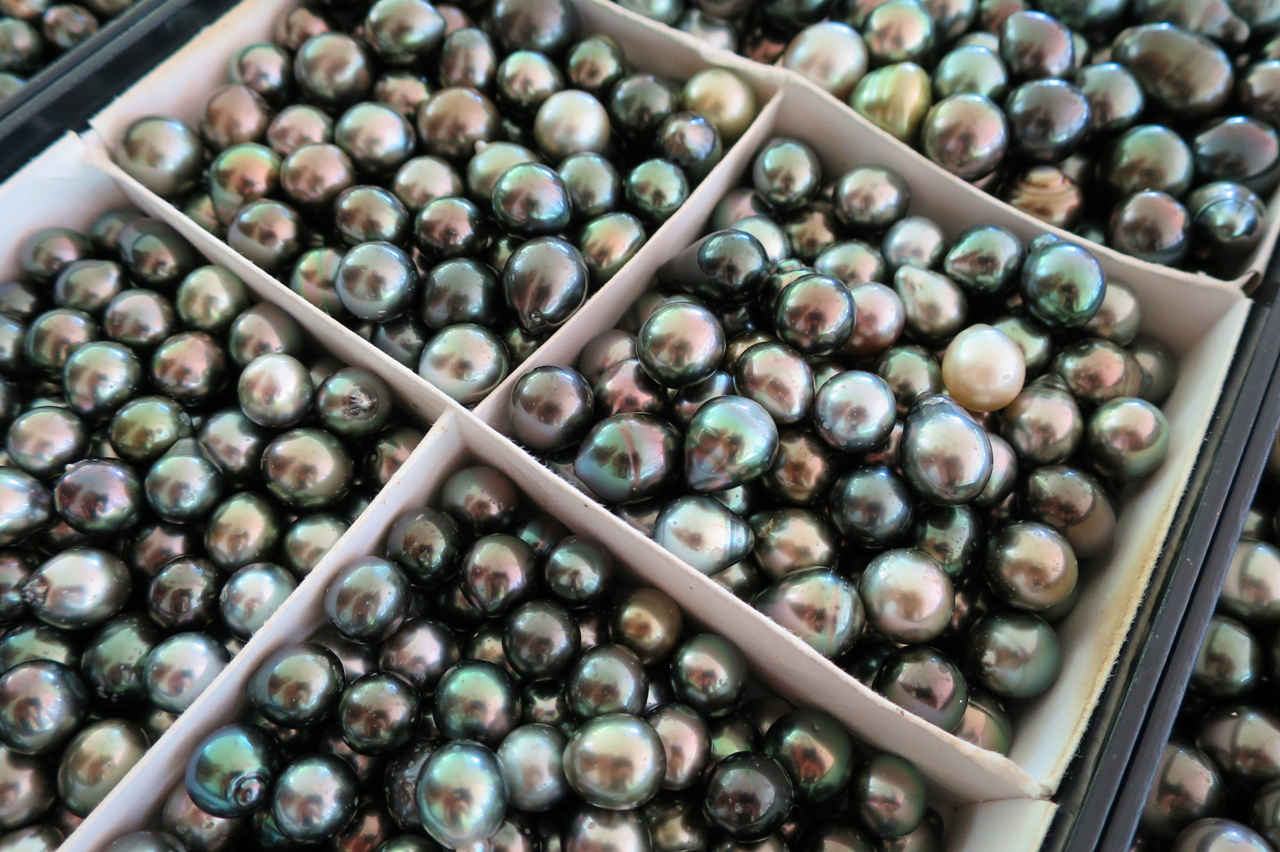 Champon Pearl Farm has the biggest selection of loose pearls we've seen in French Polynesia
