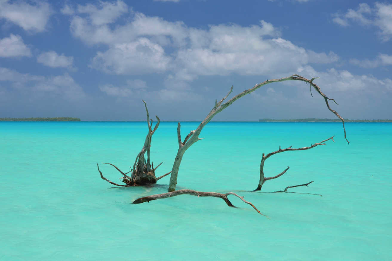Driftwood in the lagoon of Tetiaroa with its unbelievable hues of blue