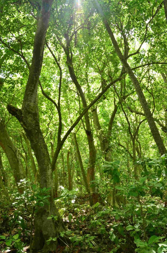 Tetiaroa Reiono pristine rainforest