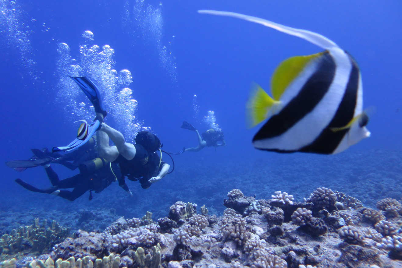 Colorful fish, plenty of hard coral and sharks can be seen when diving around Bora Bora's outer reef