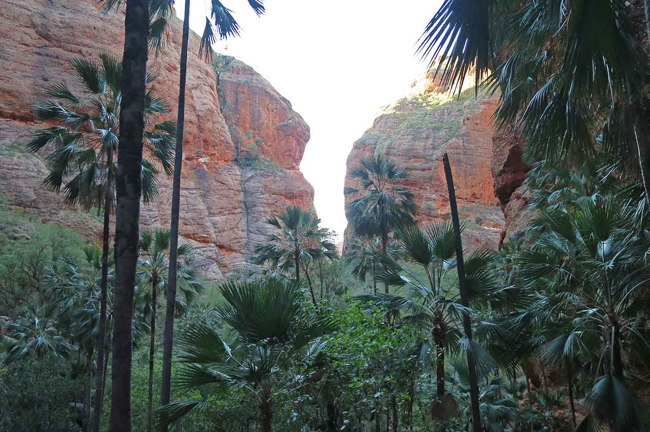 View from Mini Palms Gorge towards the entrance to the hike