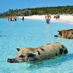 Bahamas 360 best-kept secrets Dallas Morning News
