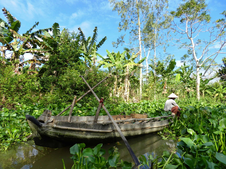Farmer harvesting lotus flowers in a Mekong Canal