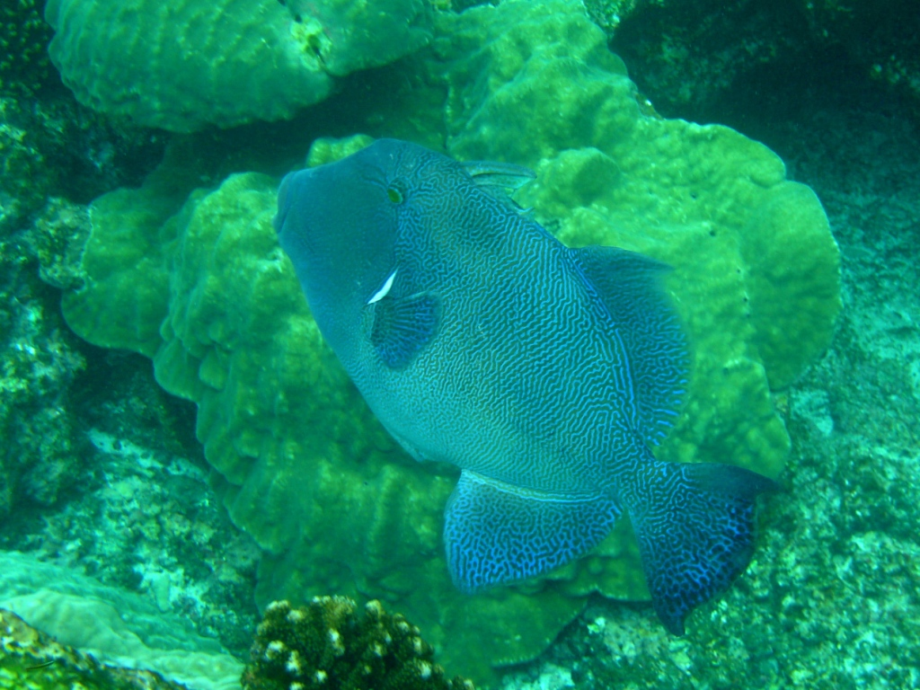 Diving in Bocas del Toror