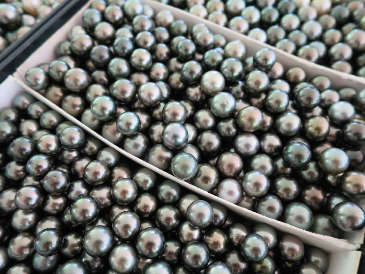 "The ""black"" pearls of French Polynesia"