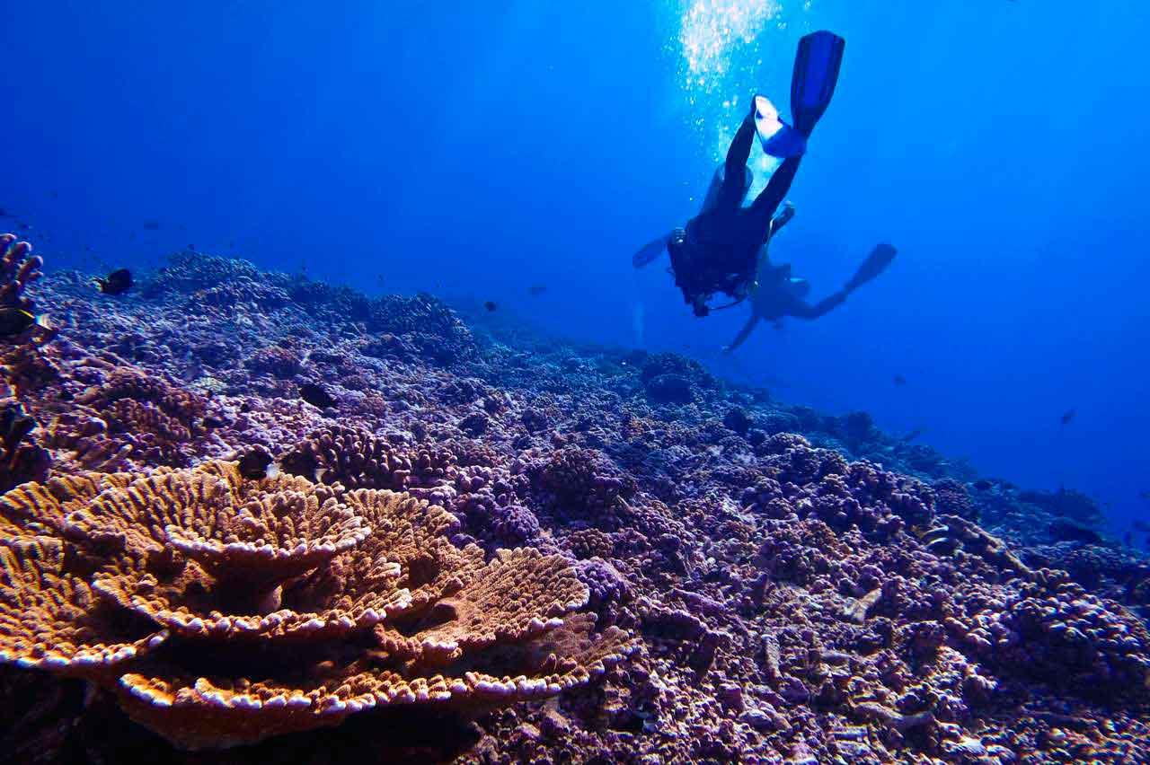 Best worst travel moments 2015: Tuamotu diving