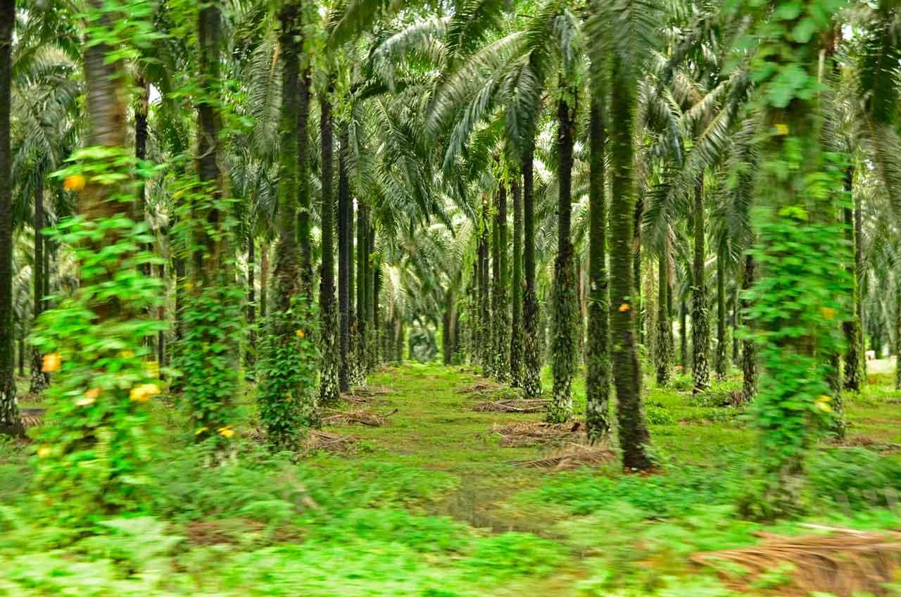 Best worst travel moments 2015: Palm oil plantation