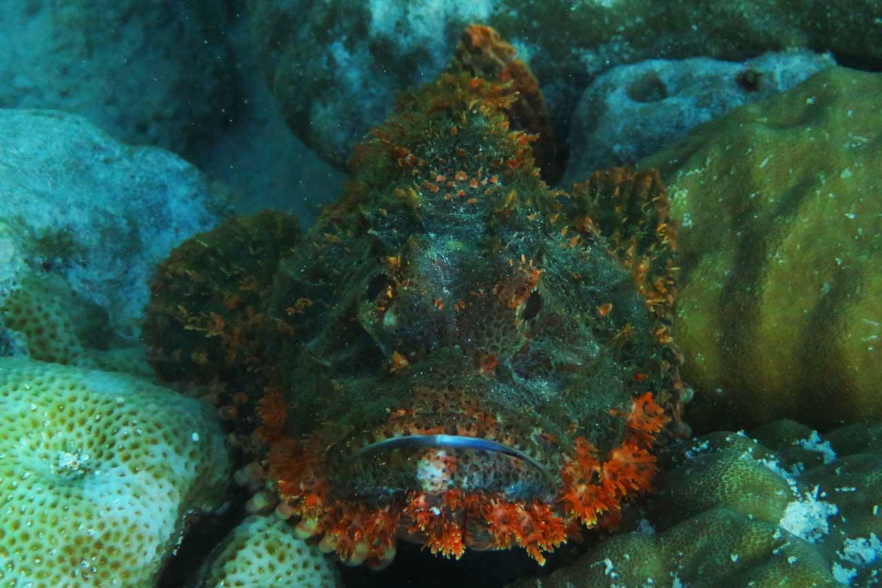 Best worst travel moments 2015: scorpionfish
