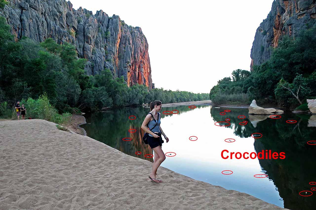 Crocodiles at Windjana Gorge