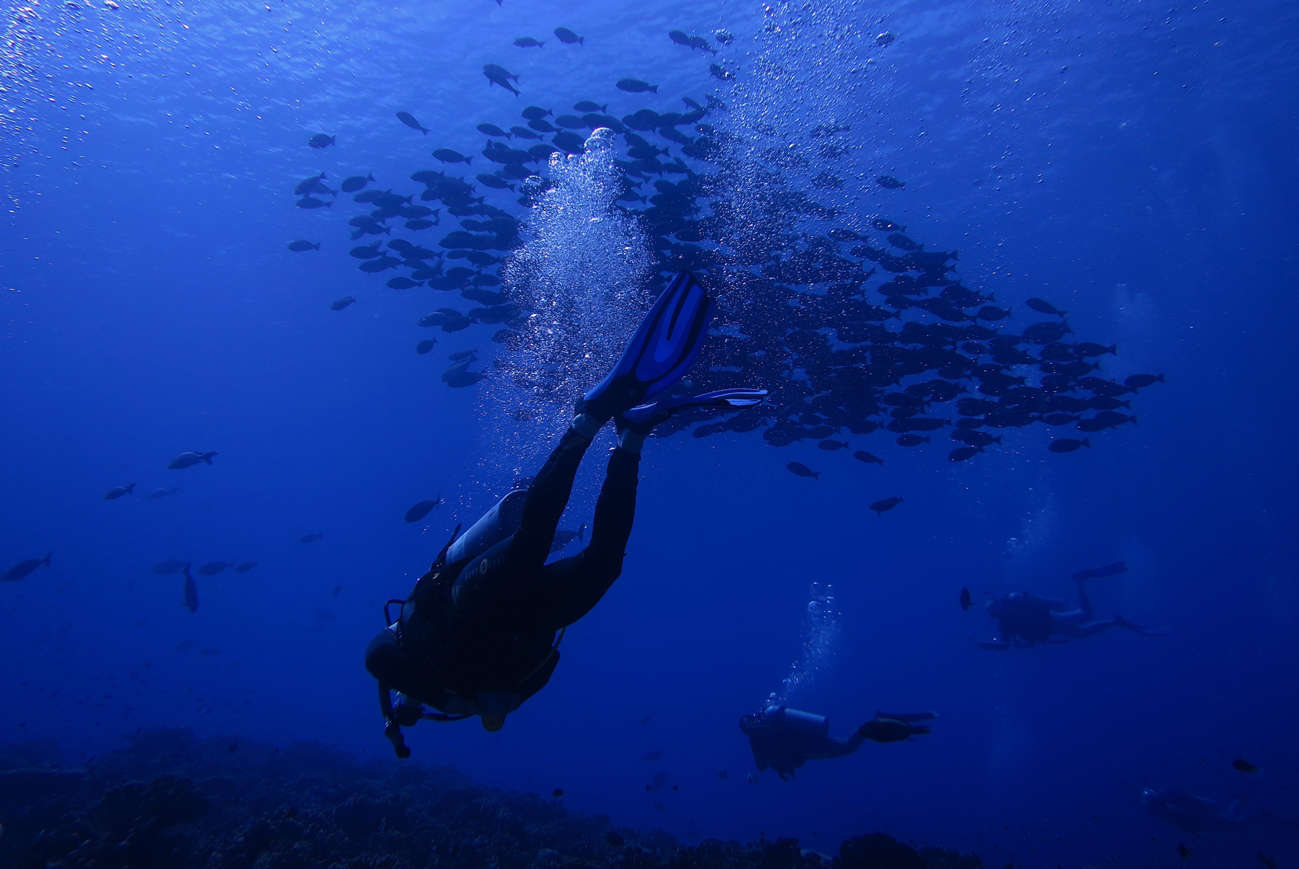 World famous dive sites attract underwater enthusiasts to Fakarava