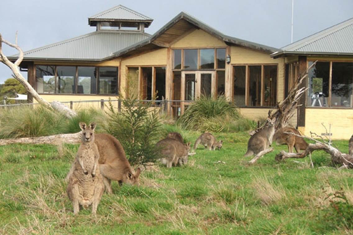 favorite eco-lodges of travel bloggers: Great Ocean Ecolodge