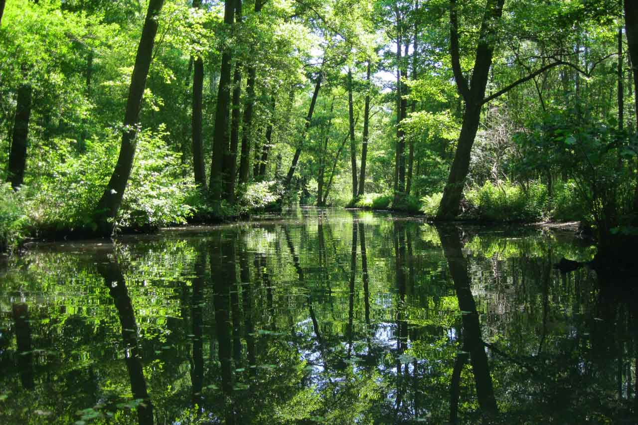 kayaking in the spreewald canal forest
