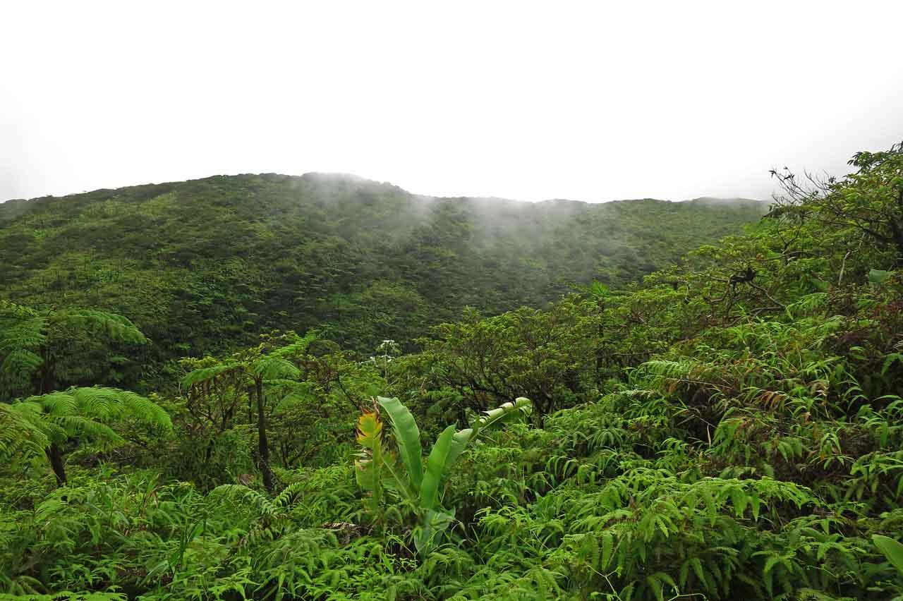 The trail up La Soufrière traverses misty cloudforest