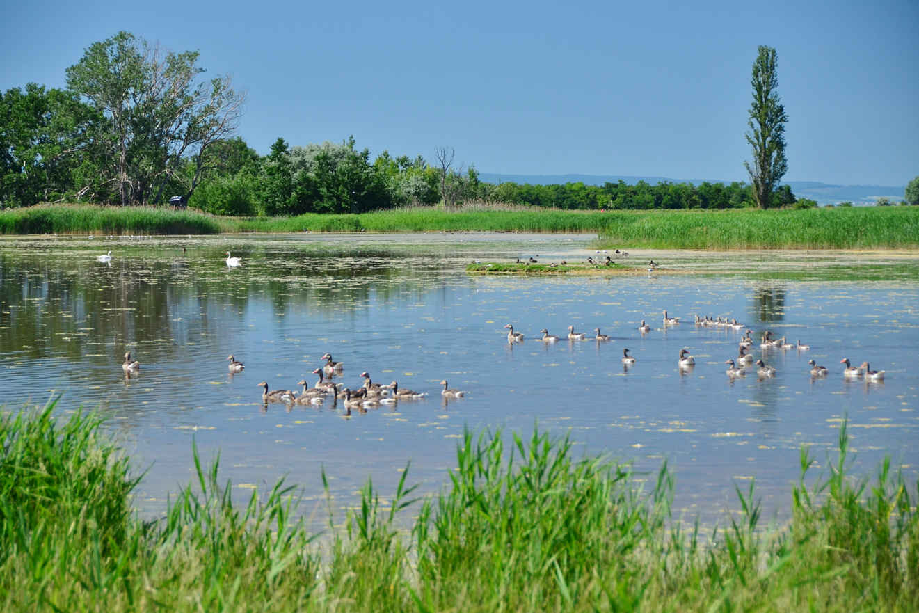 Parts of Lake Neusiedl and its surroundings are a UNESCO World Heritage Site and home to more than 300 species of birds