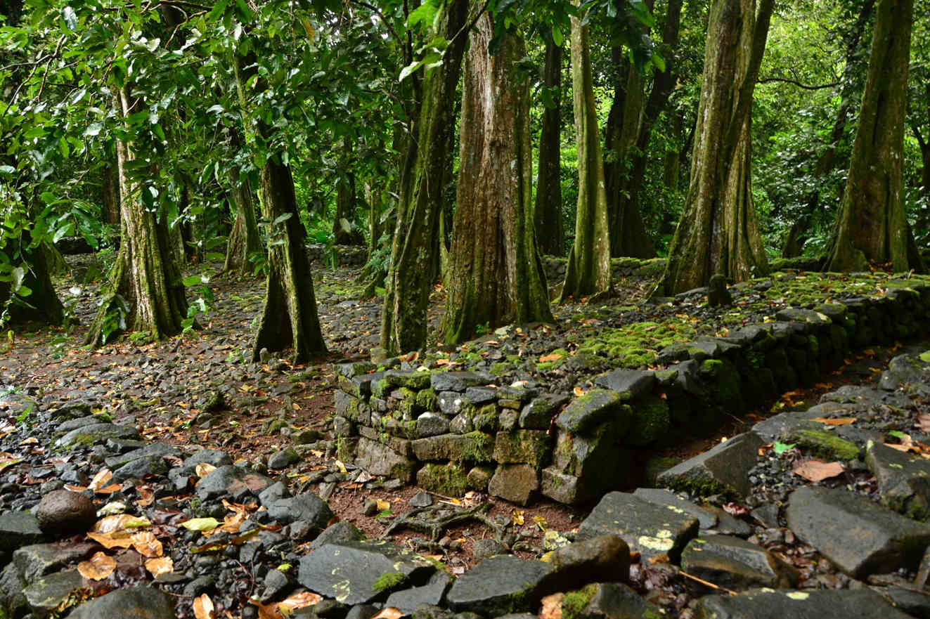 Impressive historic religious sites, so-called maraes, can be found in the jungle next to the Belvedere Road on Moorea