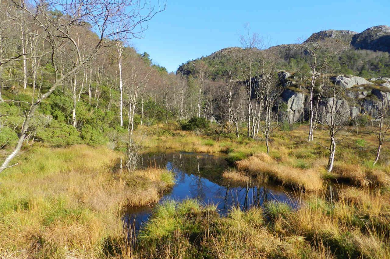 The hike up Preikestolen meanders through moor