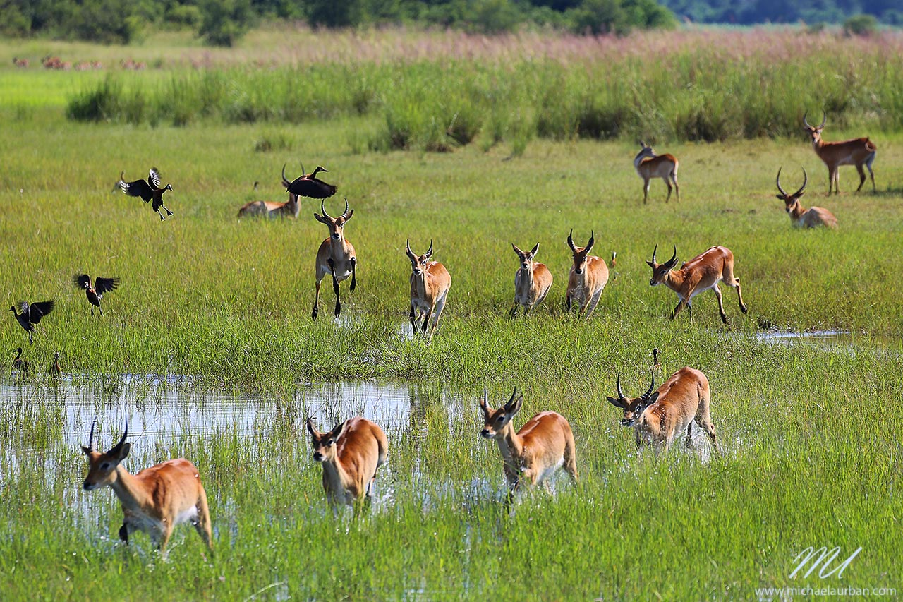 things you didn't know about Namibia Caprivi Bwabwata national park antilopes