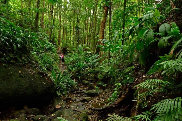 vermont nature trail rainforest