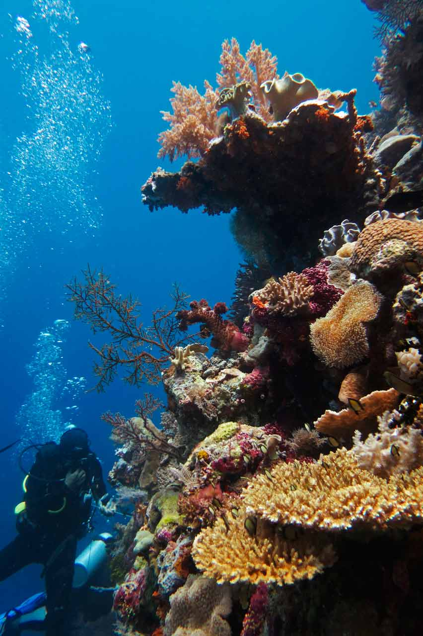 A rich coral wall at Wakatobi Marine Park