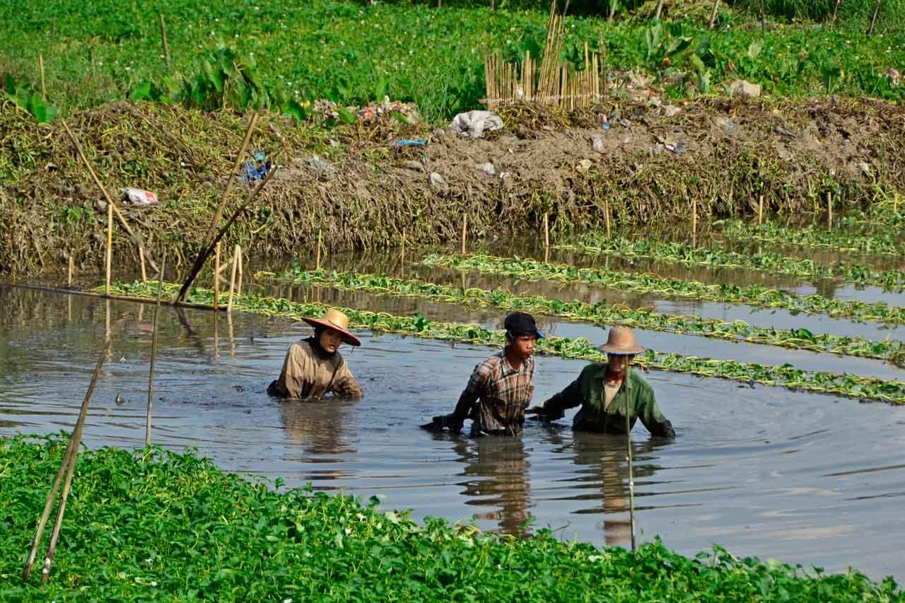 Yangon Circle Line farmers